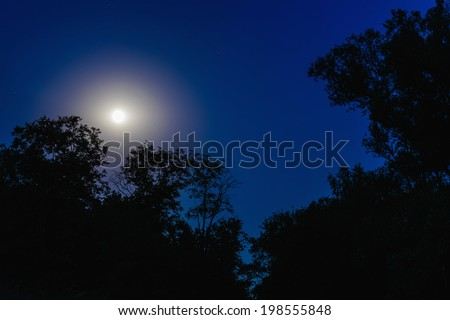 night full moon through the dark branches of trees - stock photo