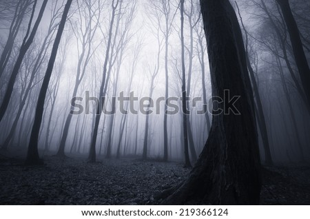 night in a creepy forest on halloween - stock photo