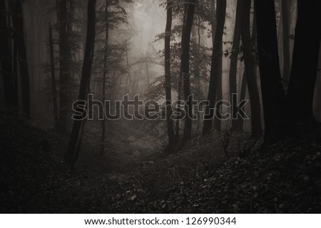 night in forest sepia - stock photo