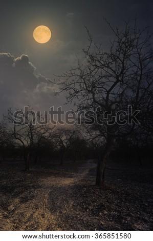 night in the winter garden - stock photo