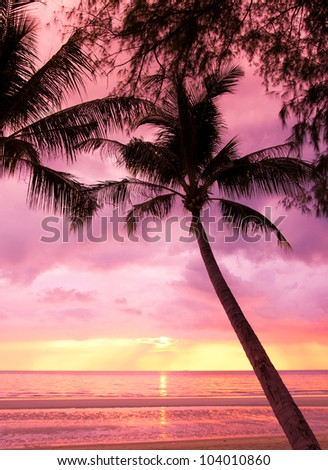 Night is Coming Palm Paradise - stock photo