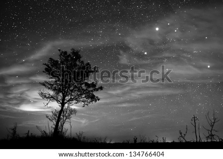 Night landscape with lonely tree under the clear sky. - stock photo