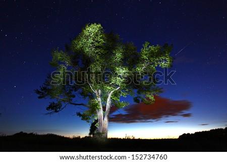 Night lonely tree falling stars - stock photo