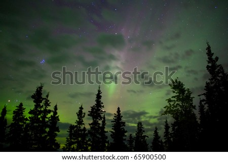 Night sky with lots of stars, northern lights (Aurora borealis) and some clouds above tree tops. - stock photo