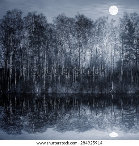 Night view of the forest by the lake. - stock photo
