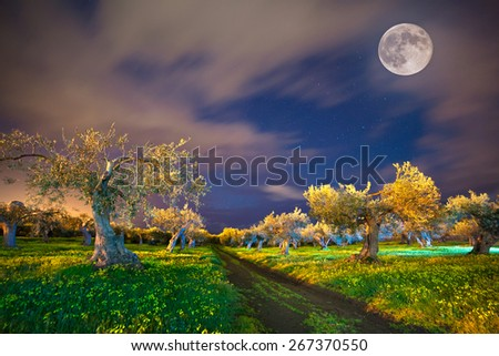 Night view of the tangerine garden at Cape Milazzo, Sicily, Italy, Europe. - stock photo