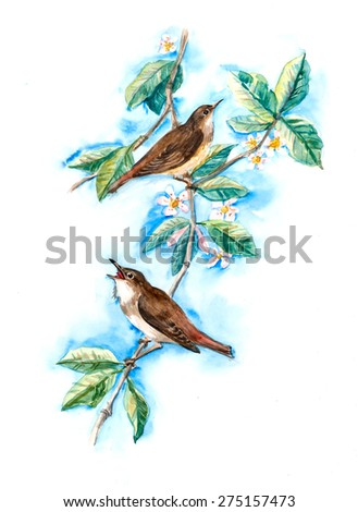 Nightingales on a branch with flowers. Decoration with wildlife scene. Pattern with two birds. Watercolor hand drawn illustration