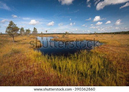 Nigula bog nature reserve in summer