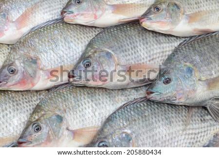 Nile Tilapia - stock photo