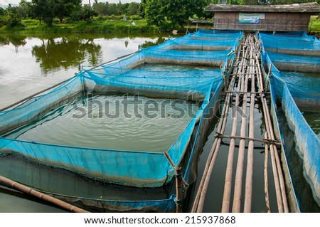 Nile Tilapia Fish farms with blue net and bamboo pathway - stock photo