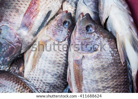 Nile tilapia fish in the market for sale. - stock photo
