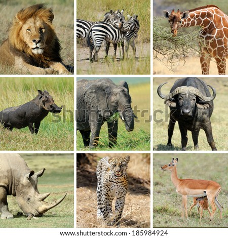 Nine african animal collage. Lion, zebra, elephant, giraffe, buffalo, warthog, rhino, leopard, impala - stock photo