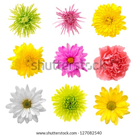 nine mix flower isolated on white background - stock photo