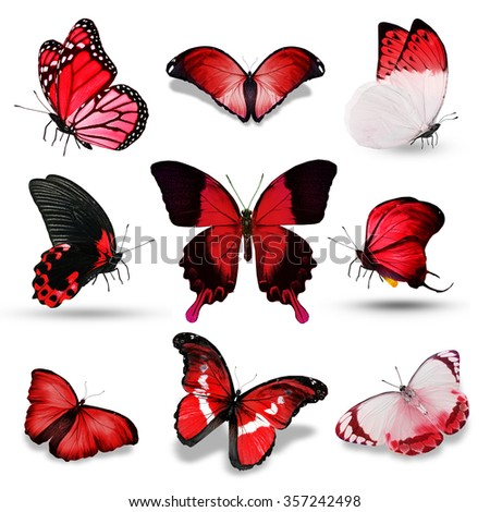 Nine red butterflies on white background - stock photo