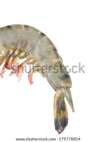nine shrimp isolated on white background  - stock photo
