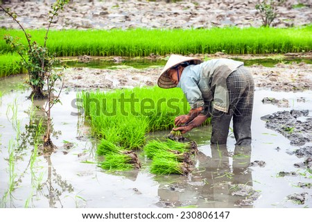 NINH BINH, VIETNAM - FEBRUARY 8, 2014: Vietnamese farmer works at rice field at foggy morning. Organic agriculture at southeast asia
