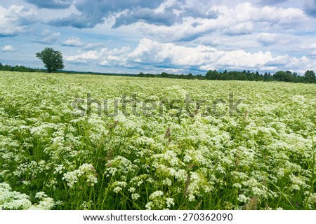 Nobody Outside Fresh Landscape  - stock photo