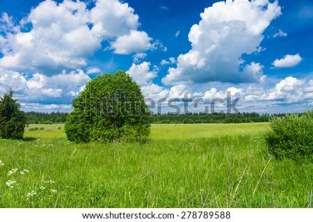 Nobody Outside Fresh Landscape  - stock photo