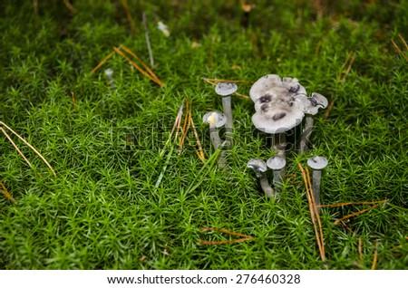Non-edible mushrooms on moss background - stock photo