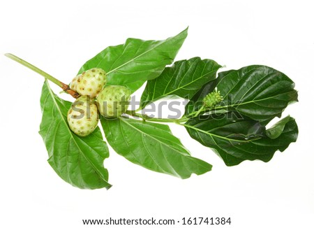 Noni fruits - stock photo