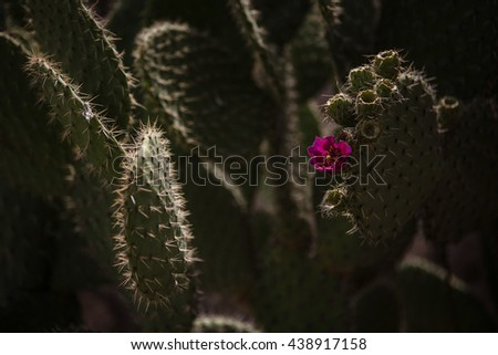 Nopal plant with flower - stock photo