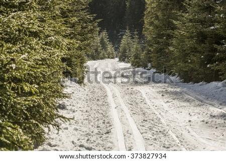 Nordic ski trail at Modrava, empty cross-country ski track, Czech Republic - stock photo