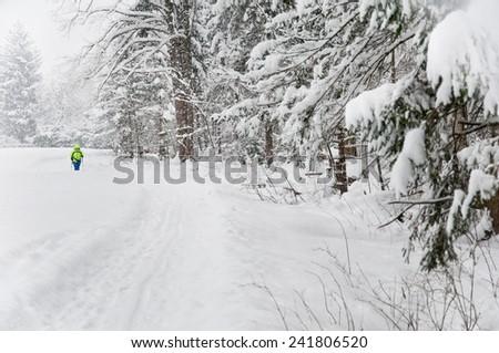 nordic walking in an idyllic winter landscape - stock photo