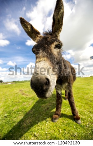 Norfolk Broads, Donkey close up - stock photo