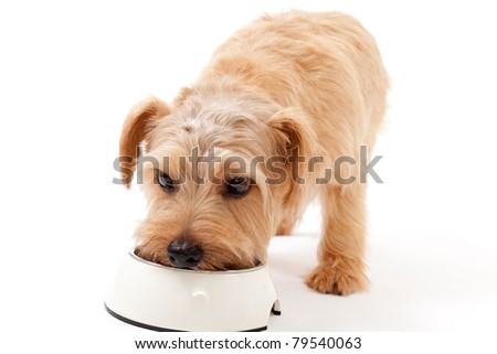 Dog Takes Food Out Of Bowl Before Eating