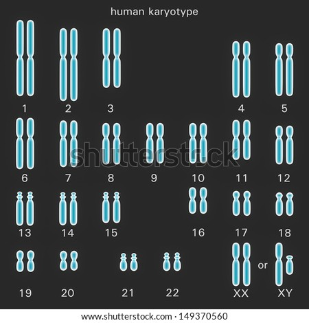 Normal human karyotype which is the diploid pairing of the chromosomes dependant upon their number, size, and coding and controls inherited characteristics in genetics - stock photo