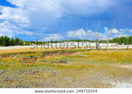 Norris Geyser Basin area in Yellowstone National Park, Wyoming - stock photo
