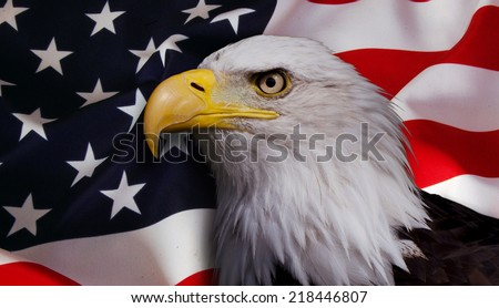 North American bald eagle on American flag background