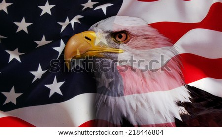 North American Bald Eagle on American flag opaque - stock photo