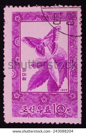 North Korea Circa 1965: Postage stamp printed in North Korea shows image of a butterfly flying out of the cocoon graphics violet color on a white background - stock photo