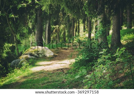 North scandinavian pine forest with stones, Sweden natural travel outdoors vintage hipster background - stock photo
