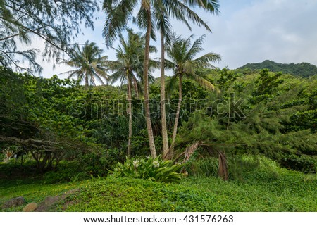 North Shore Oahu Hawaii at Kahana Bay beautiful green lush park by the ocean.