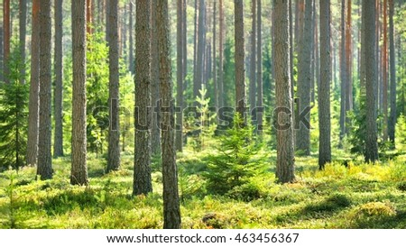 Northern forest in Finland