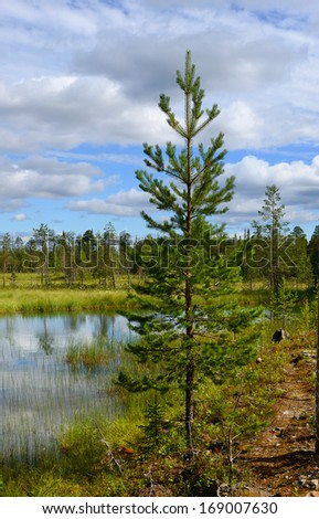 Northern landscape with swamp. Finland, Lapland - stock photo