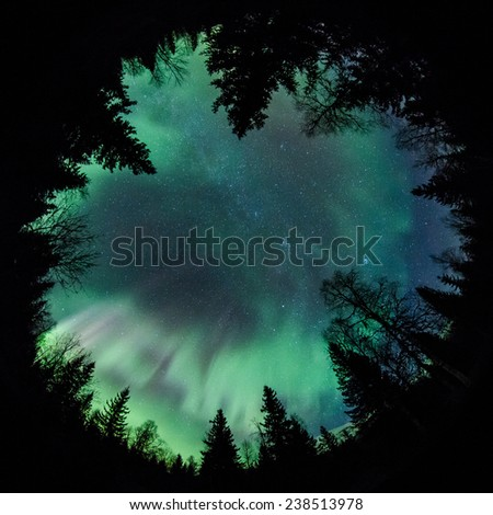 Northern lights (Aurora Borealis) above a forest fisheye - stock photo