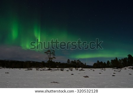 Northern lights (aurora borealis) over a snow covered marsh - stock photo