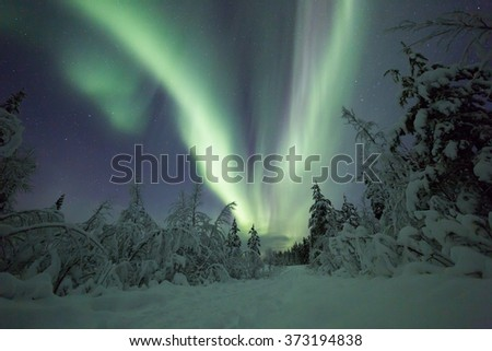 Northern lights (aurora borealis) over a winter forest in Lapland