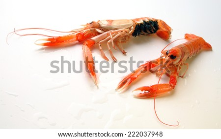 norway lobster - stock photo