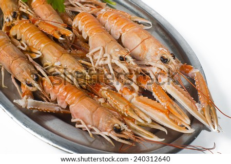 Norway lobster on white background - stock photo