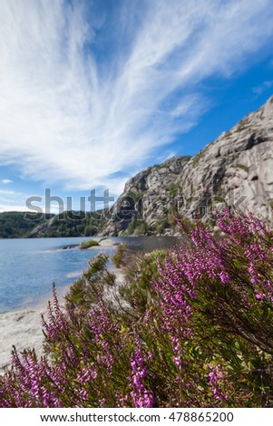 Norway, Scandinavia. Beautiful landscape flowers on the lake shore middle of the stone mountains. blue sky