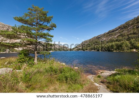 Norway, Scandinavia. Beautiful landscape tree on the lake shore middle of the stone mountains