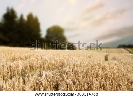 Norway summer Landscape with Wheat Field and Clouds - stock photo