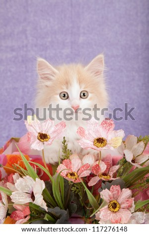 Norwegian Forest Cat kitten with faux fake flowers against lilac purple background - stock photo