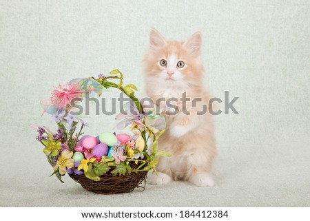 Norwegian Forest Cat kitten with floral basket with ribbons, bows and Easter eggs on light green background  - stock photo