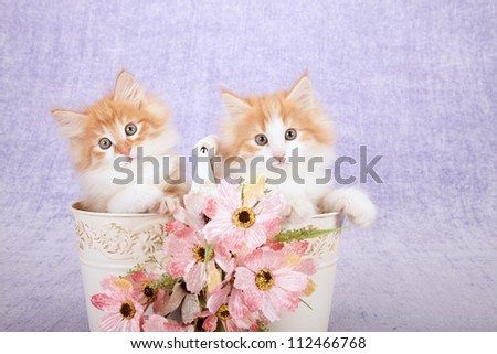 Norwegian Forest Cat kittens sitting inside pails buckets with pink flowers on lilac background