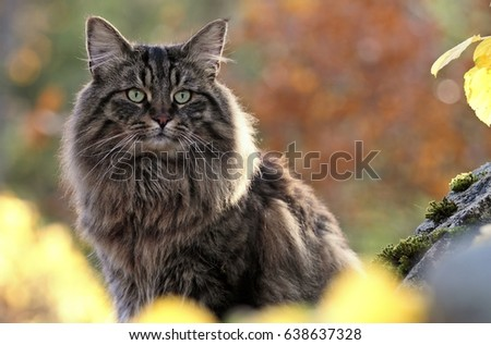Norwegian Stock Images Royalty Free Images Amp Vectors